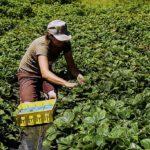 Travailleuse Agricole