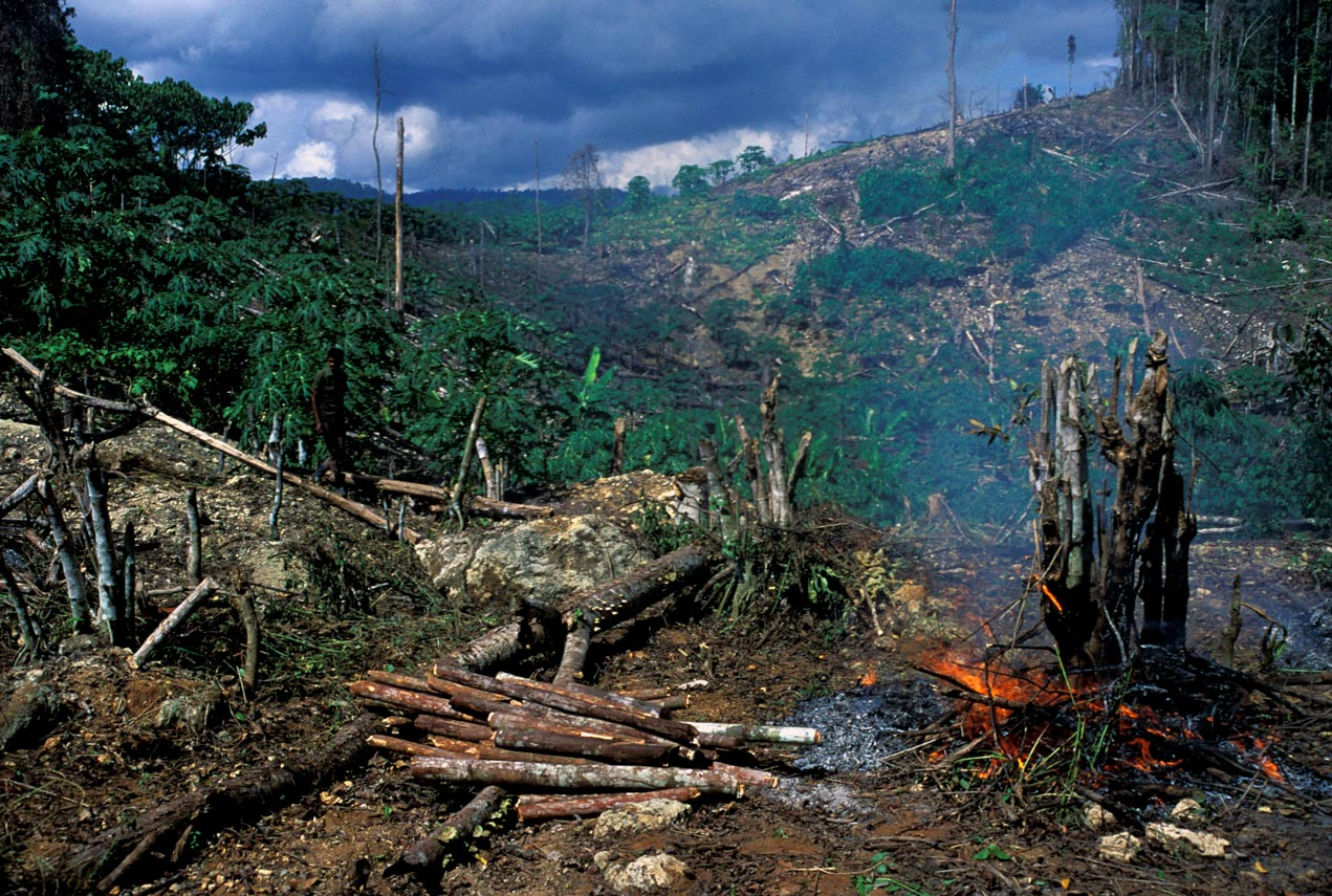 deforestation-indonesie_Curt-Carnemark-World-Bank
