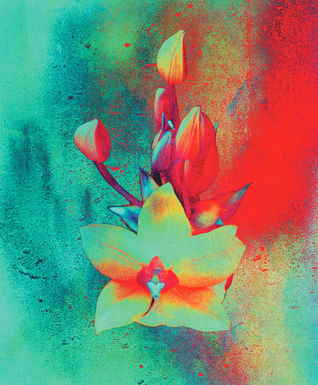 Collage Orchidées contre le béton