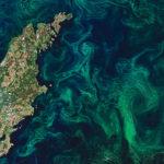 Photo satellite d'une efflorescence phytoplanctonique en mer Baltique, été 2019