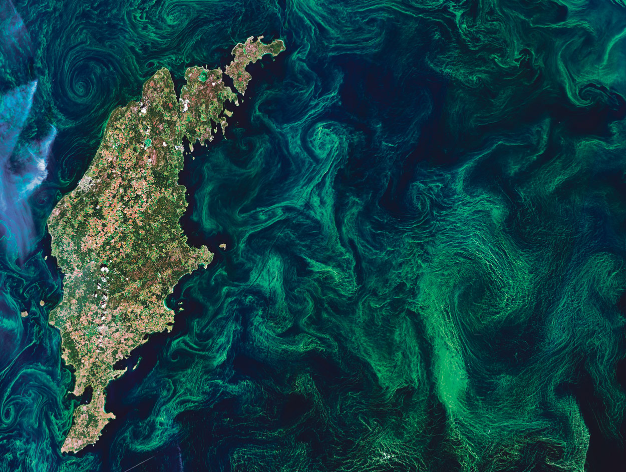 Photo satellite d'une efflorescence phytoplanctonique en mer Baltique, été 2019